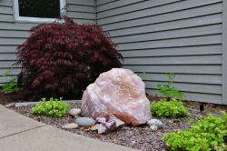 155 lb. rose Quartz, Japanese maple, Greendale WI