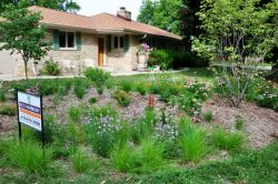 Rain garden, native plants, pollinators, brids and butterflies. Grafton WI