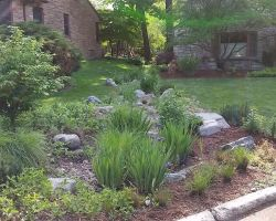 Rain garden, lush native plantings and stonework