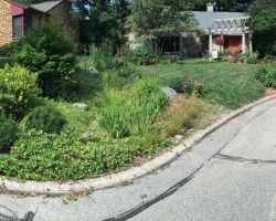 Rain garden, mature native plantings and decorative stonework