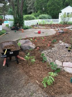 Boulders, decorative stone and plantings in rain garden
