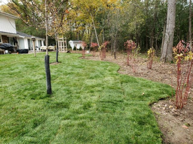 Brookfield Backyard Transformation