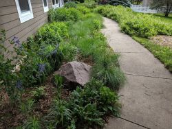 Front Walk Native Plants Pollinator Friendly