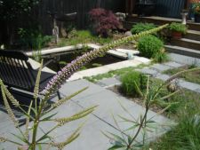 Milwaukee WI Artistic Perennials Structural Plants Pond View