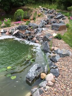 Natural WaterFeature Pond Closeup
