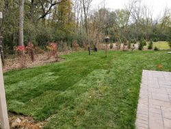 New Sod Backyard Full Transformation