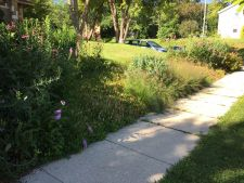 Port Washington WI Hillside Planting Low Maintenance Mowing Solution