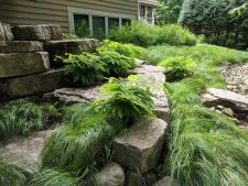 Sussex WI Outcropping Wall Maidenhair Fern Penn Sedge Lawn Alternative