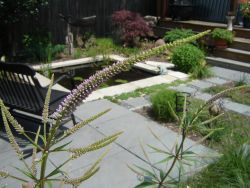 Artistic Perennials Structural Plants Pond View