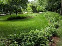 Yard Transformation Native Plants Naturalizing